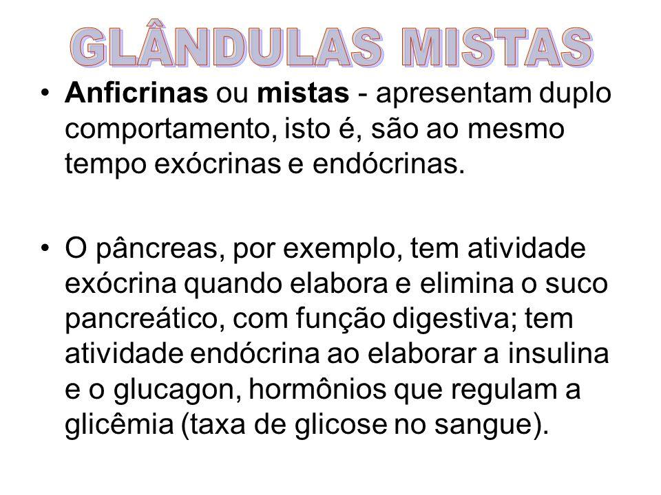 GLÂNDULAS MISTAS Anficrinas ou mistas - apresentam duplo comportamento, isto é, são ao mesmo tempo exócrinas e endócrinas.