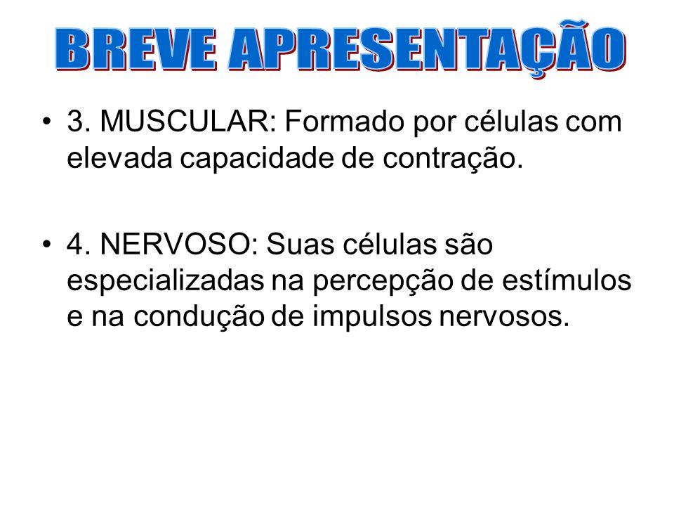 BREVE APRESENTAÇÃO 3. MUSCULAR: Formado por células com elevada capacidade de contração.
