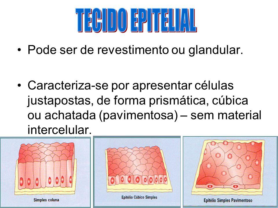 TECIDO EPITELIAL Pode ser de revestimento ou glandular.