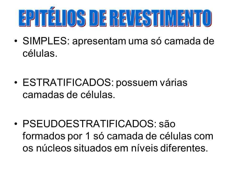 EPITÉLIOS DE REVESTIMENTO