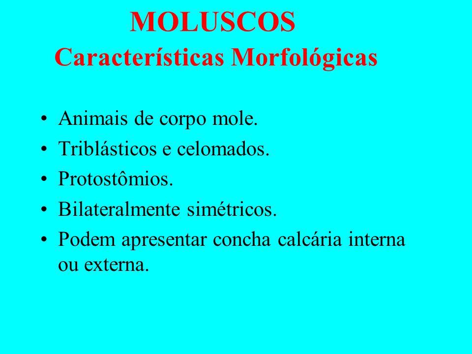 MOLUSCOS Características Morfológicas