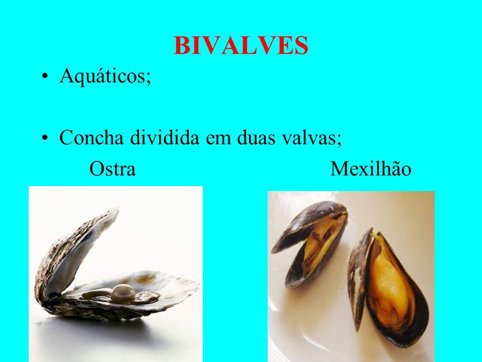 BIVALVES Aquáticos; Concha dividida em duas valvas; Ostra Mexilhão