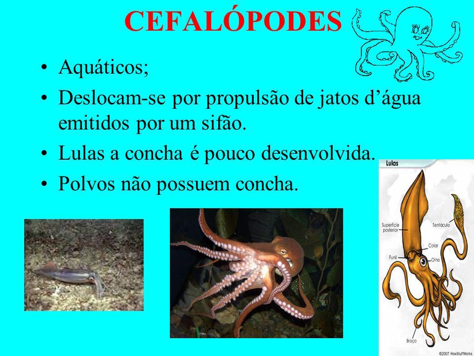 CEFALÓPODES Aquáticos;