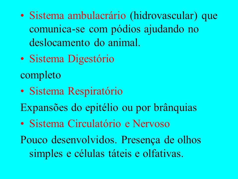 Sistema ambulacrário (hidrovascular) que comunica-se com pódios ajudando no deslocamento do animal.