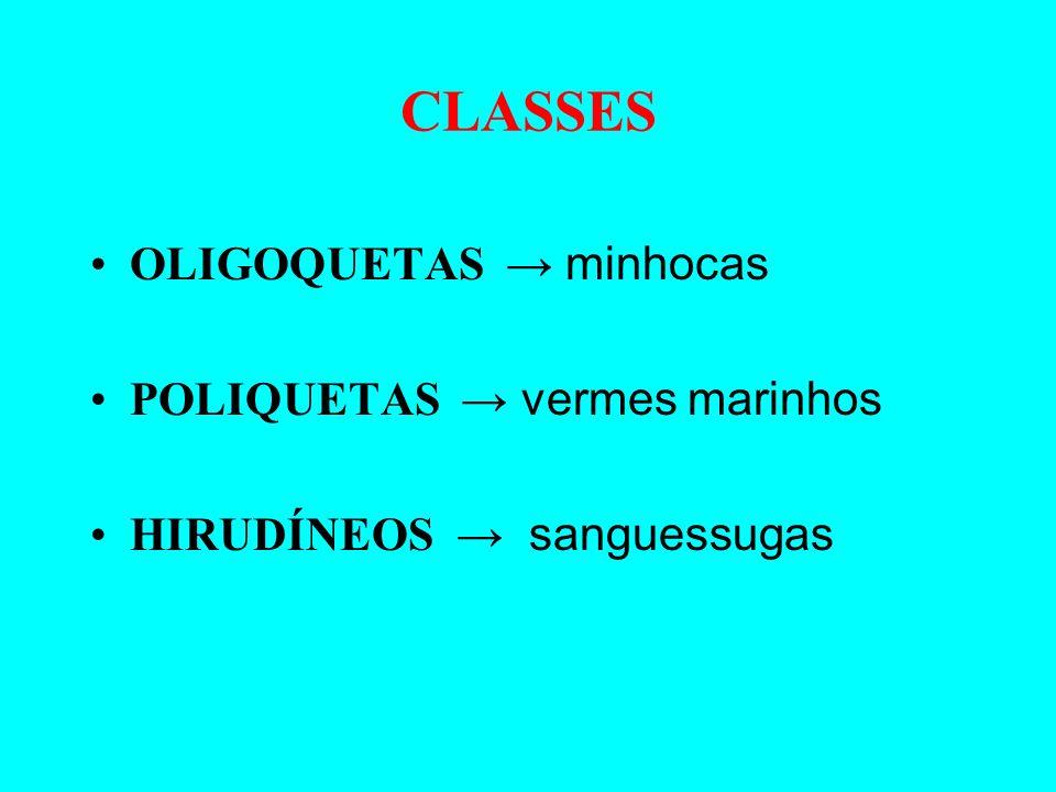 CLASSES OLIGOQUETAS → minhocas POLIQUETAS → vermes marinhos