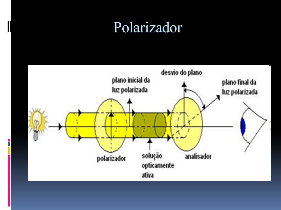Polarizador