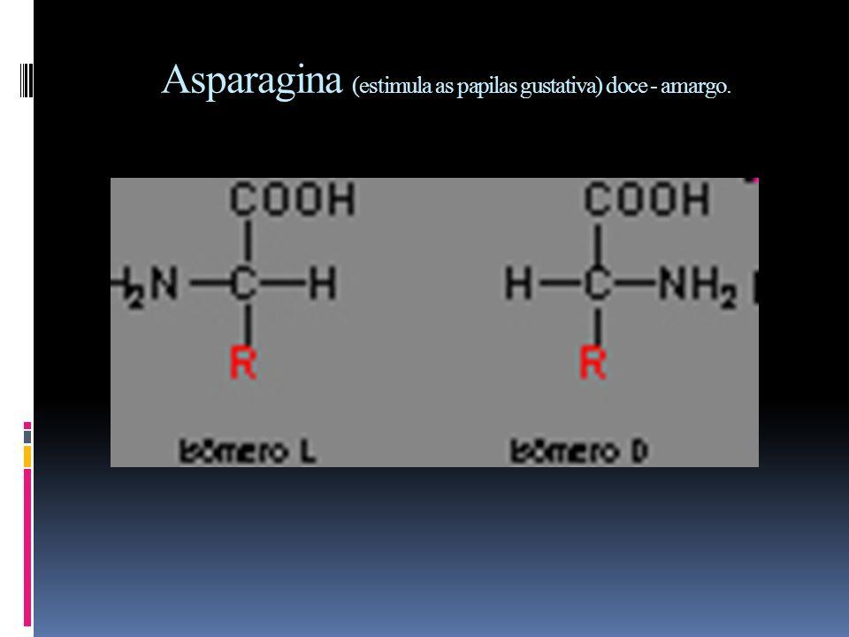 Asparagina (estimula as papilas gustativa) doce - amargo.