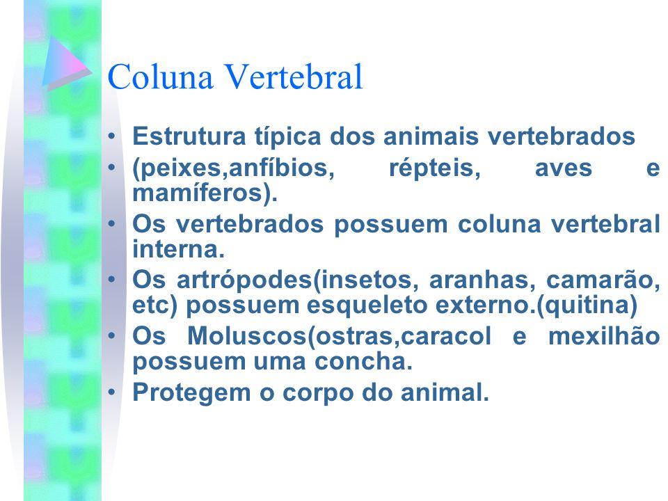 Coluna Vertebral Estrutura típica dos animais vertebrados