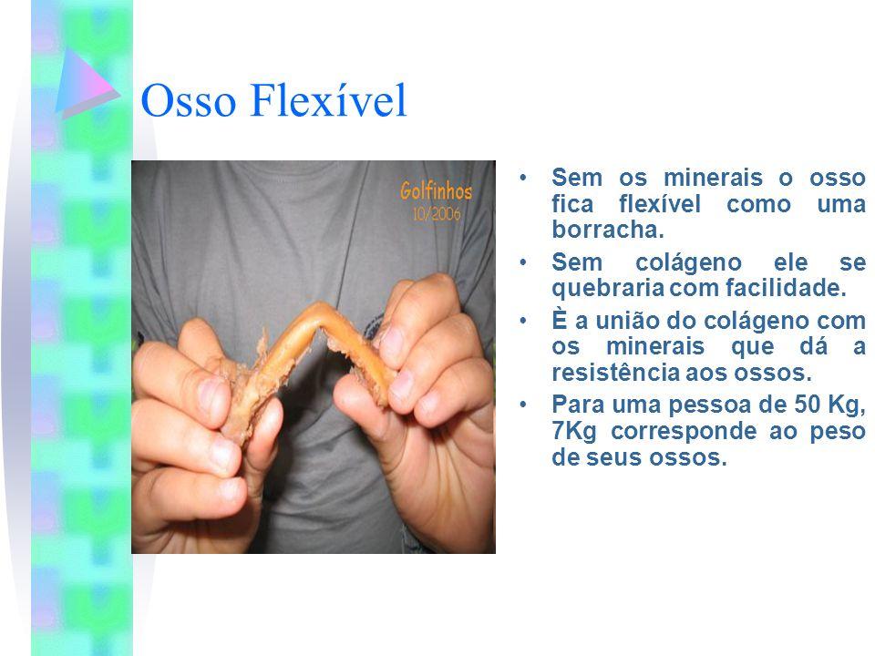 Osso Flexível Sem os minerais o osso fica flexível como uma borracha.