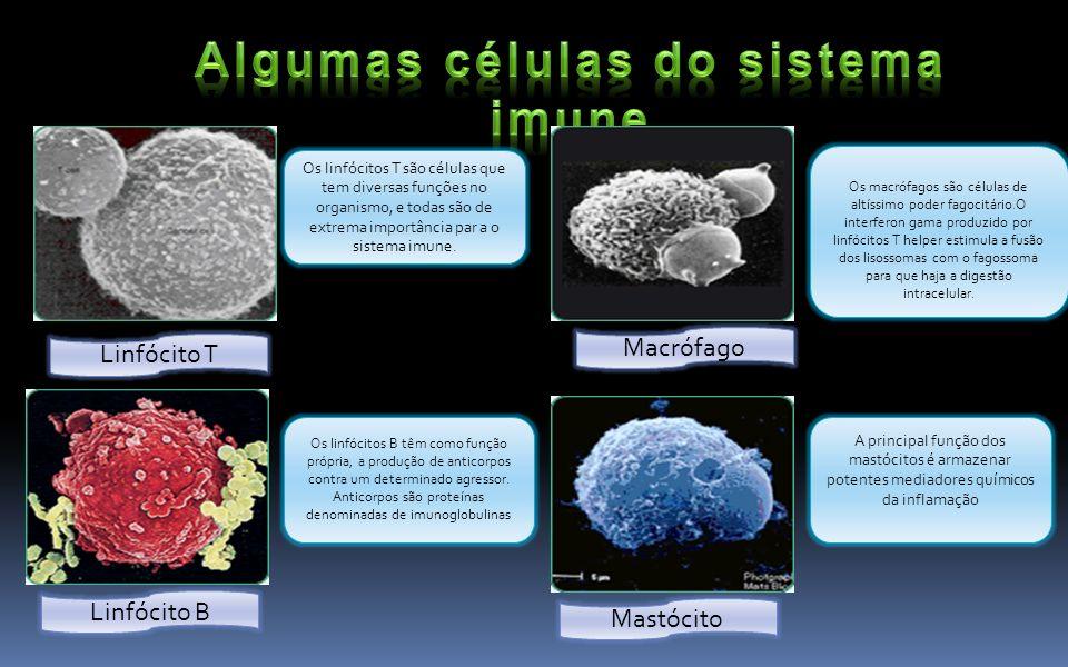 Algumas células do sistema imune