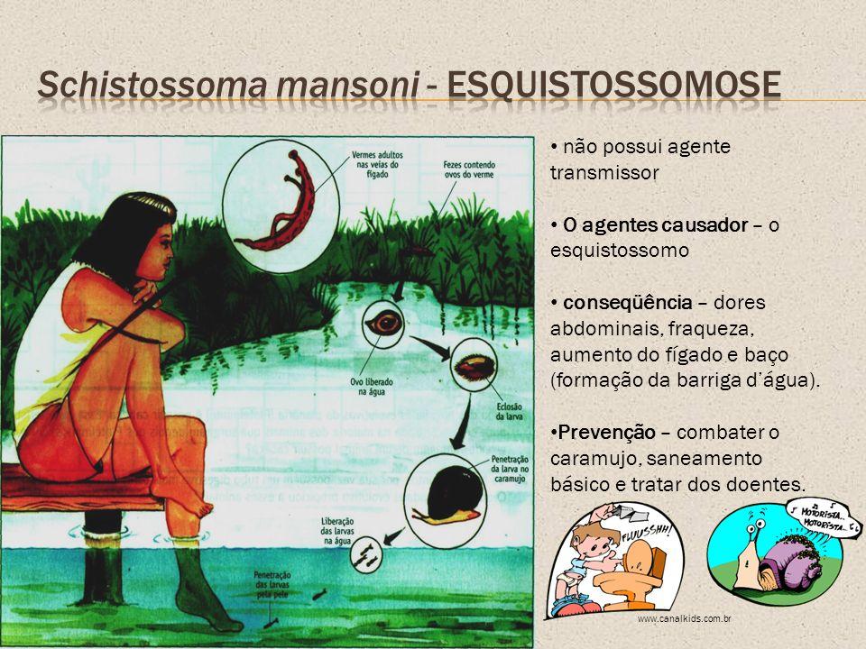 Schistossoma mansoni - Esquistossomose