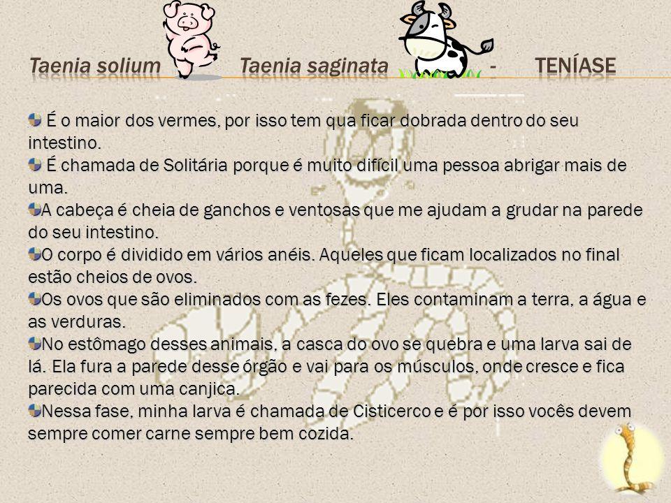 Taenia solium Taenia saginata - TENÍASE