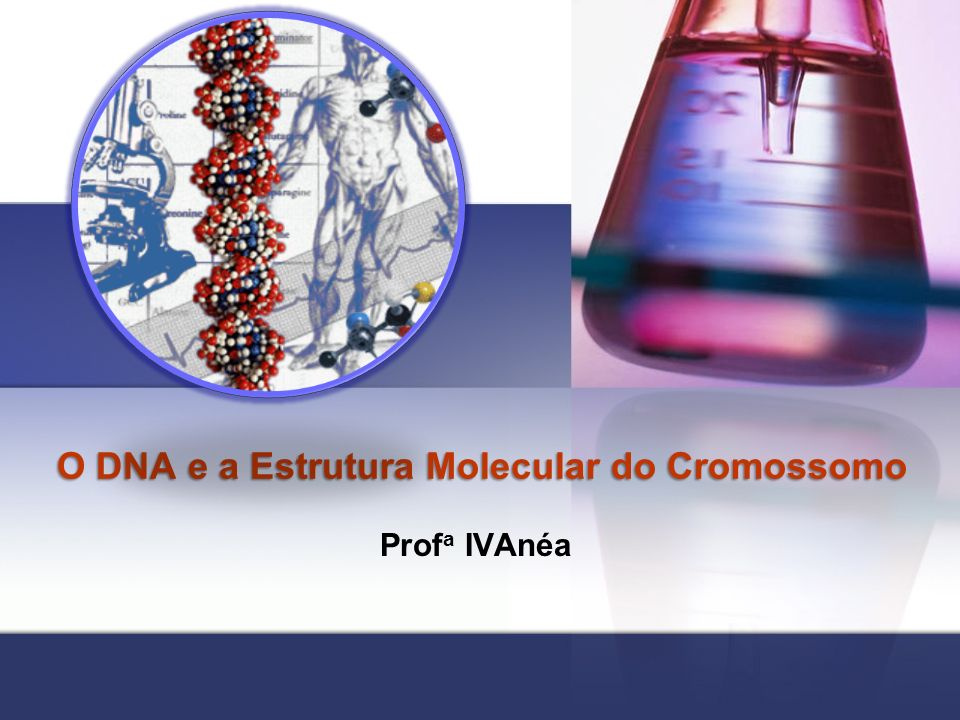 O DNA e a Estrutura Molecular do Cromossomo