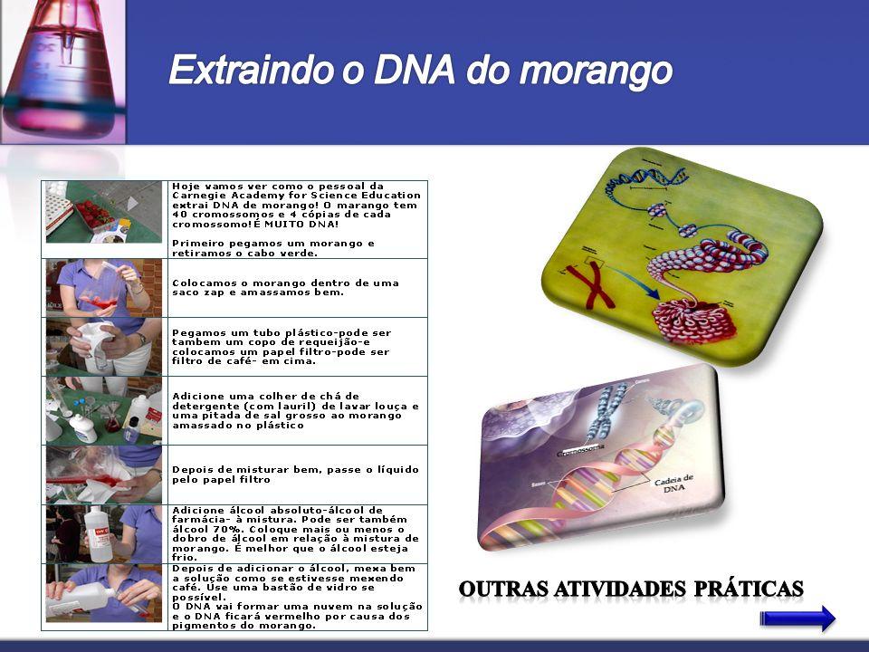 Extraindo o DNA do morango