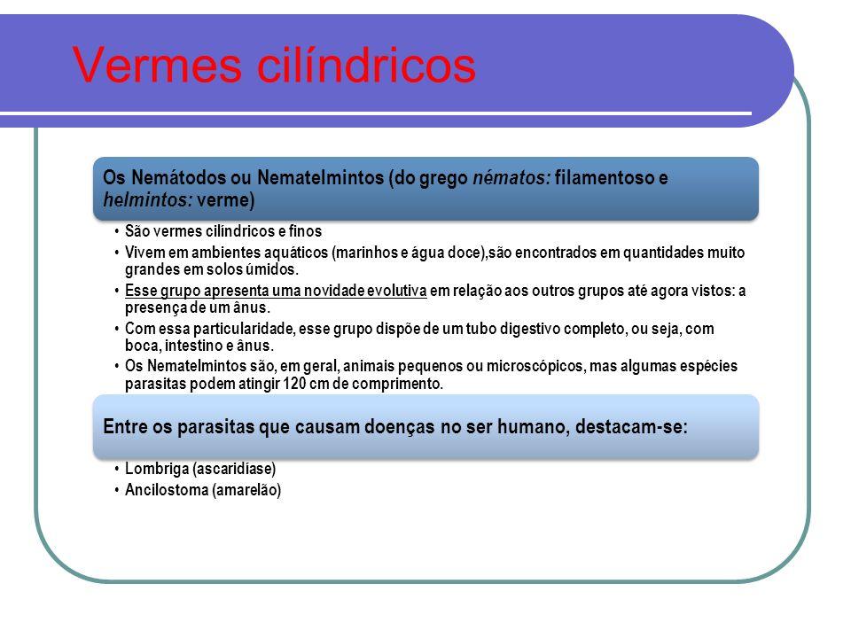 Vermes cilíndricos Os Nemátodos ou Nematelmintos (do grego nématos: filamentoso e helmintos: verme)
