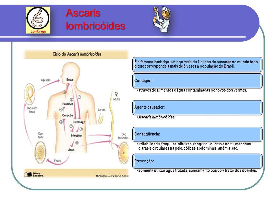 Ascaris lombricóides