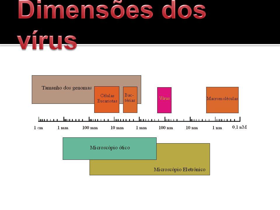 Dimensões dos vírus