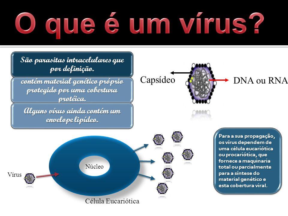 O que é um vírus Capsídeo DNA ou RNA