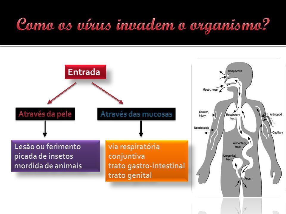 Como os vírus invadem o organismo