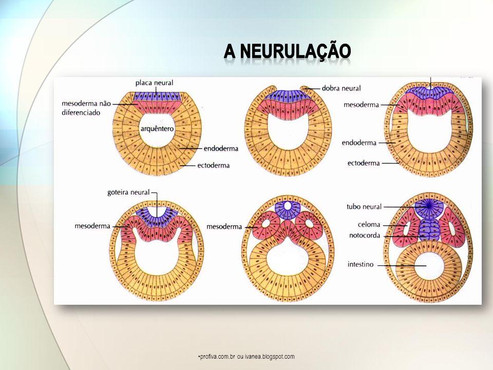 profiva.com.br ou ivanea.blogspot.com