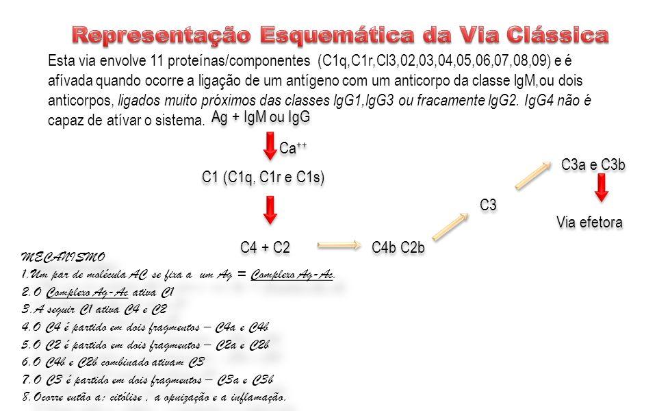 Representação Esquemática da Via Clássica