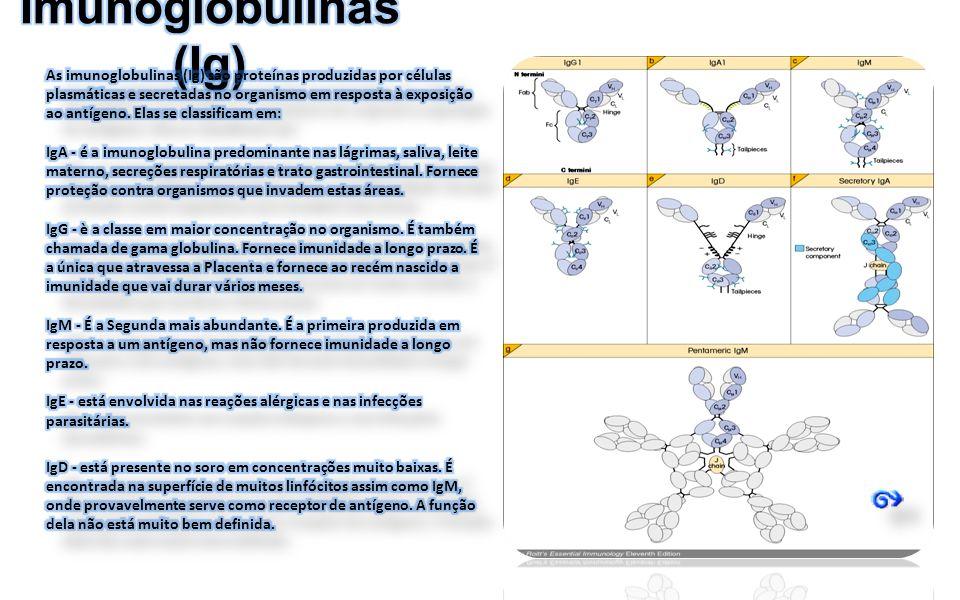 Imunoglobulinas (Ig)