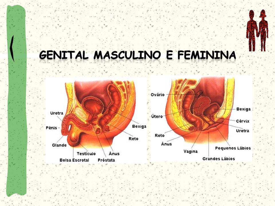 Genital Masculino e Feminina