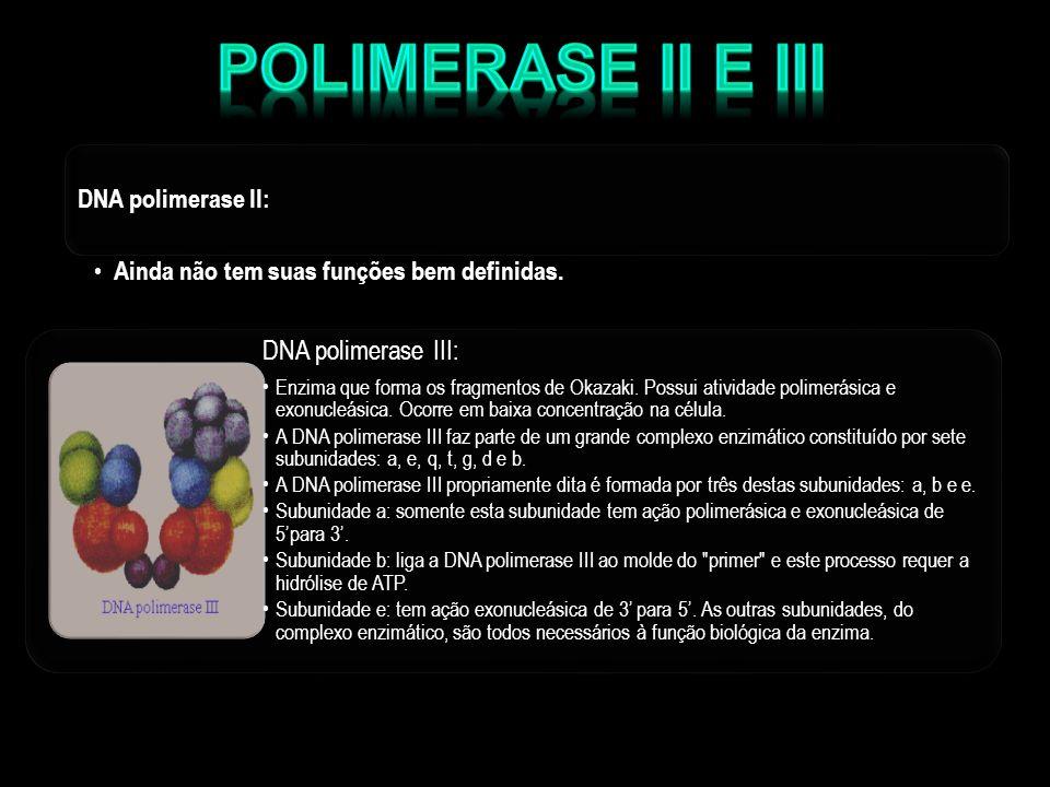 Polimerase II e III Ainda não tem suas funções bem definidas.