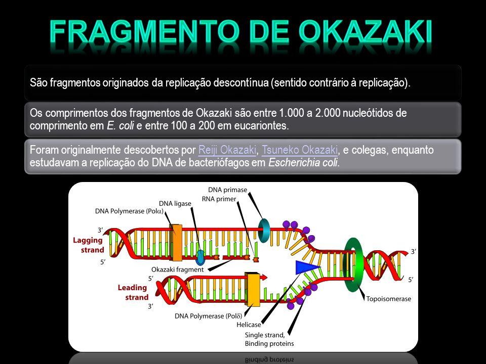 Fragmento de Okazaki São fragmentos originados da replicação descontínua (sentido contrário à replicação).