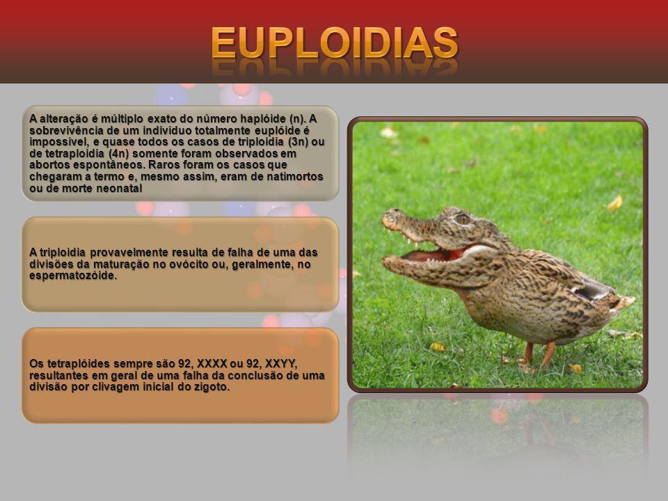 Euploidias