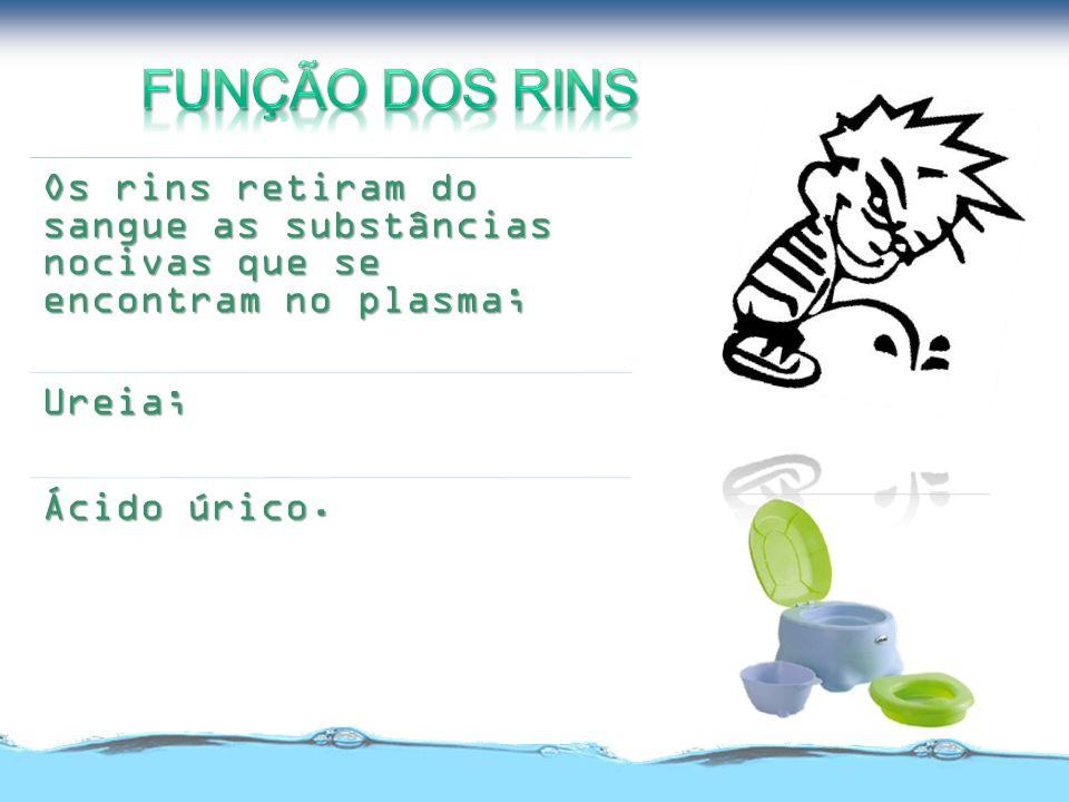 Função dos rins Os rins retiram do sangue as substâncias nocivas que se encontram no plasma; Ureia;