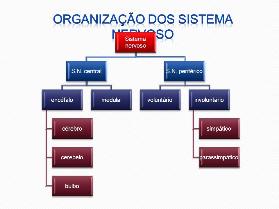 Organização dos sistema nervoso