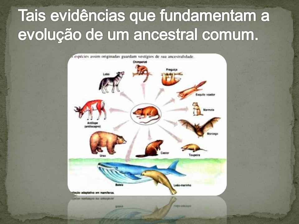 Tais evidências que fundamentam a evolução de um ancestral comum.