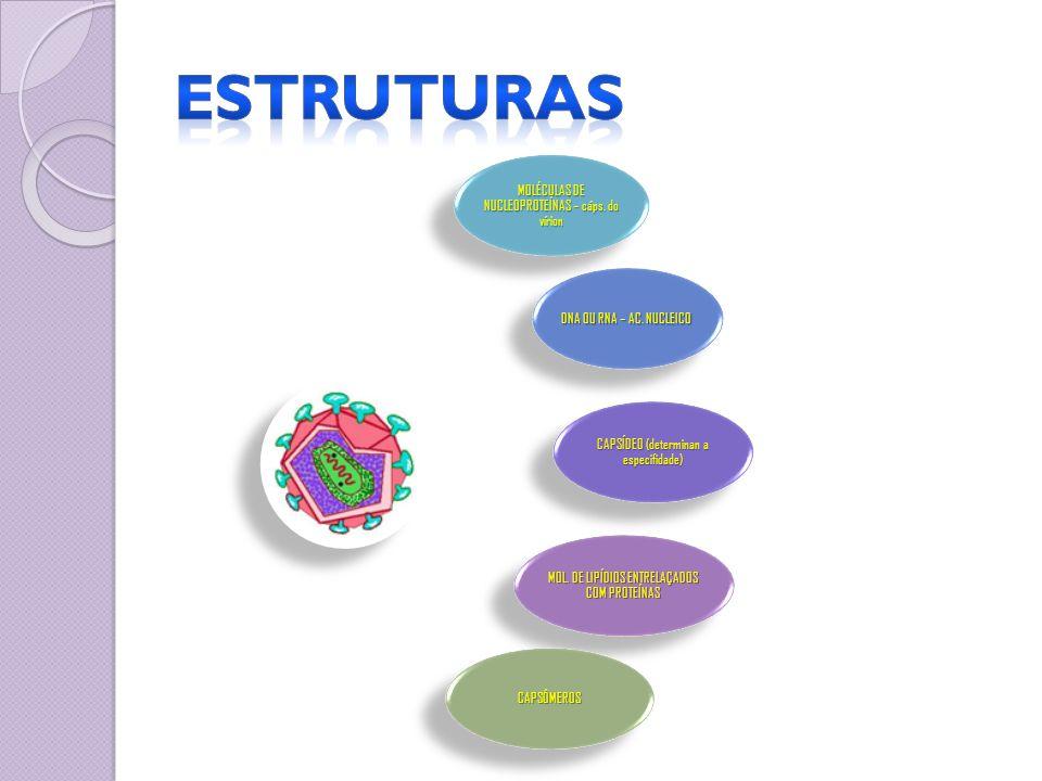 ESTRUTURAS MOLÉCULAS DE NUCLEOPROTEÍNAS – cáps. do vírion