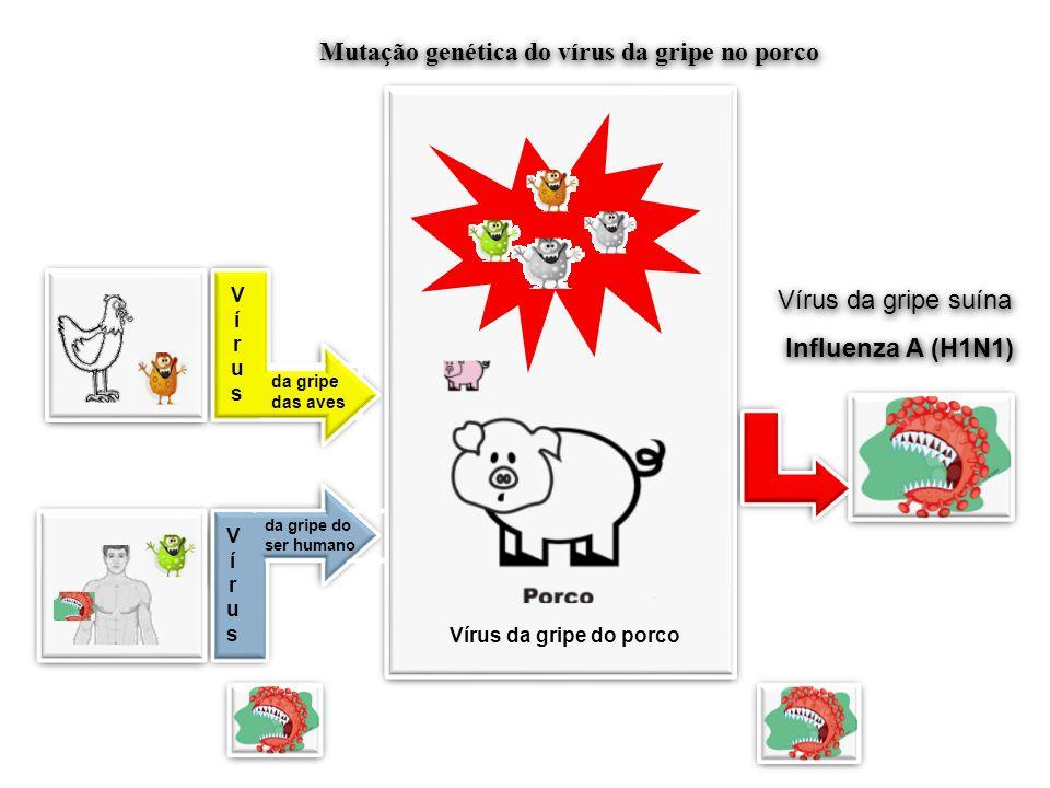 Mutação genética do vírus da gripe no porco