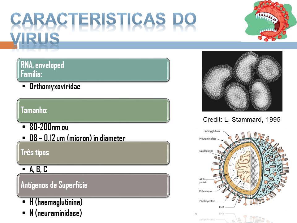 Caracteristicas do Virus