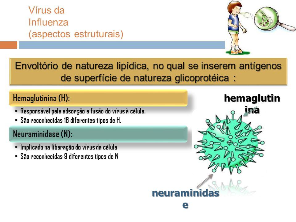 Vírus da Influenza (aspectos estruturais)