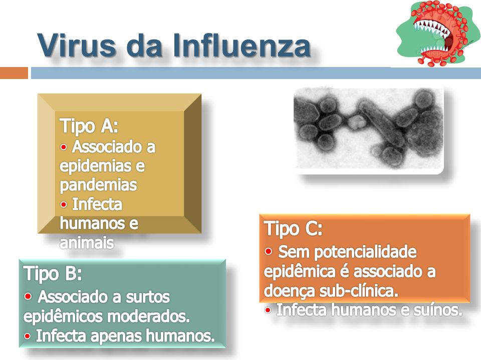 Virus da Influenza Tipo A: Tipo C: