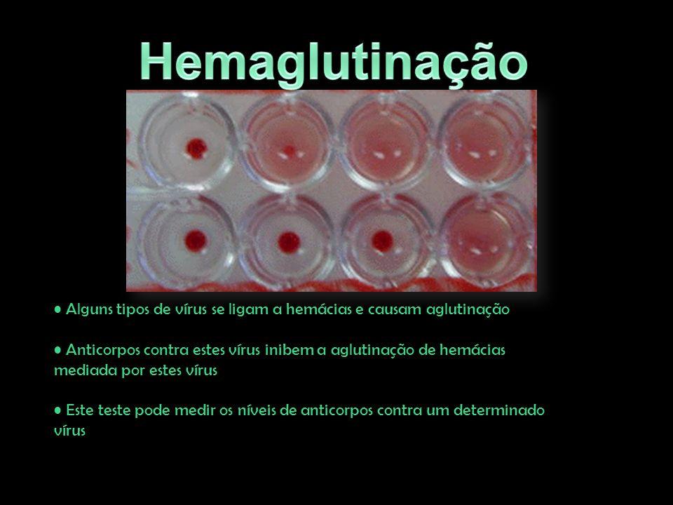 Hemaglutinação Alguns tipos de vírus se ligam a hemácias e causam aglutinação. Anticorpos contra estes vírus inibem a aglutinação de hemácias.