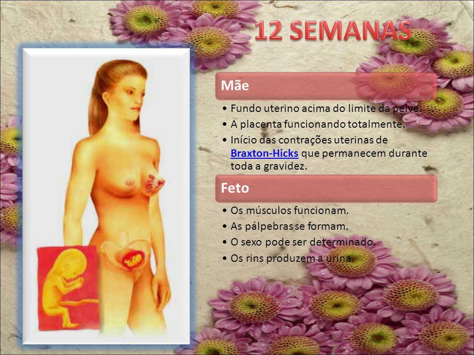 12 SEMANAS Mãe Fundo uterino acima do limite da pelve.
