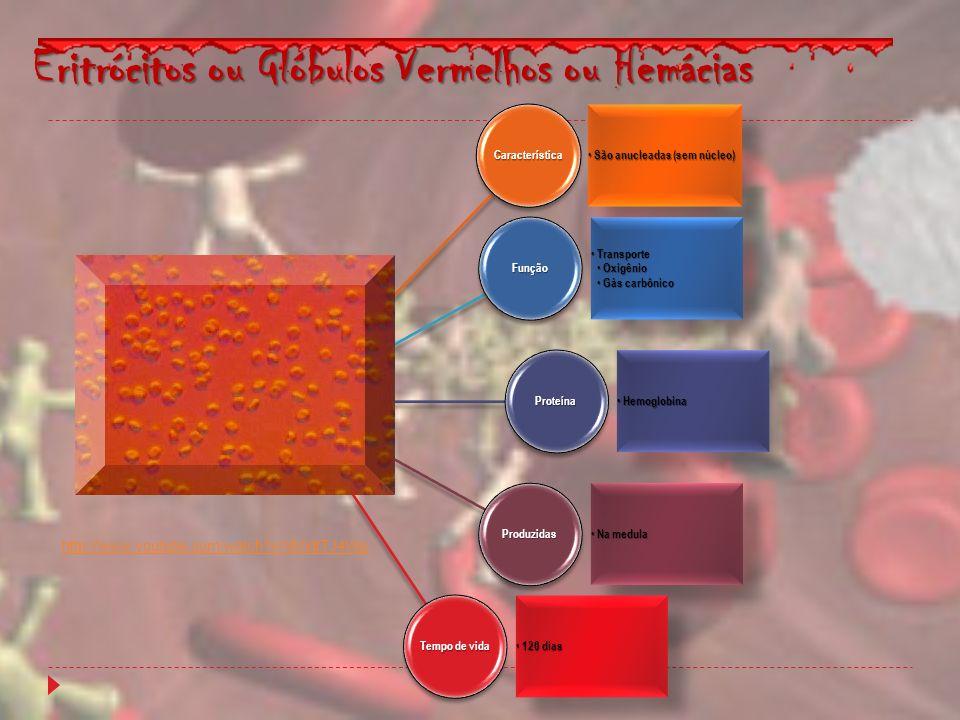 Eritrócitos ou Glóbulos Vermelhos ou Hemácias