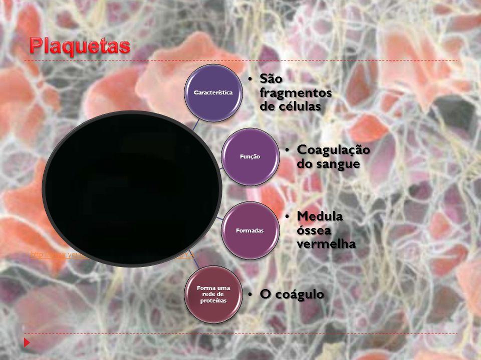 Forma uma rede de proteínas