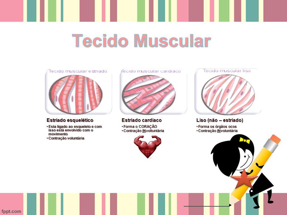Tecido Muscular Estriado esquelético Estriado cardíaco