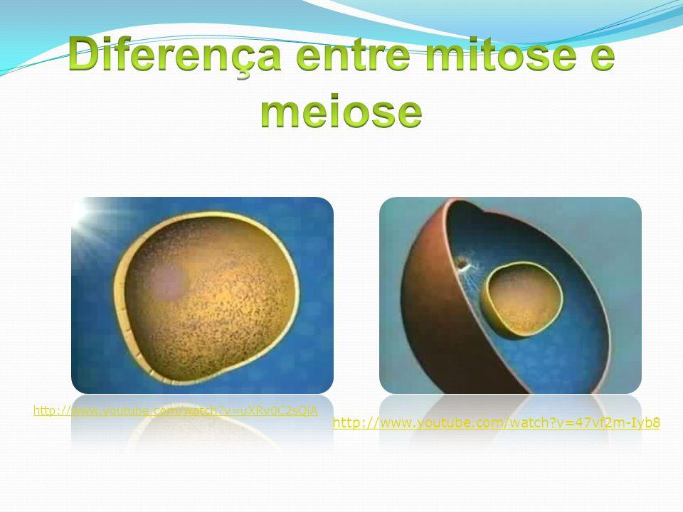 Diferença entre mitose e meiose