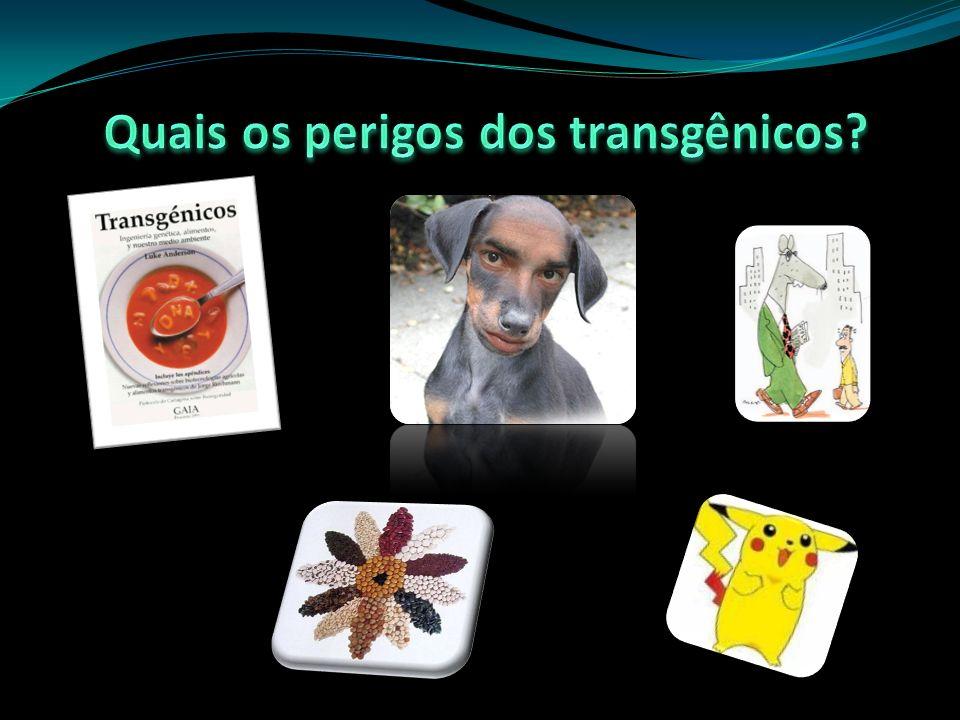Quais os perigos dos transgênicos