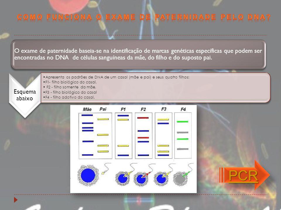 PCR Como funciona o exame de paternidade pelo DNA