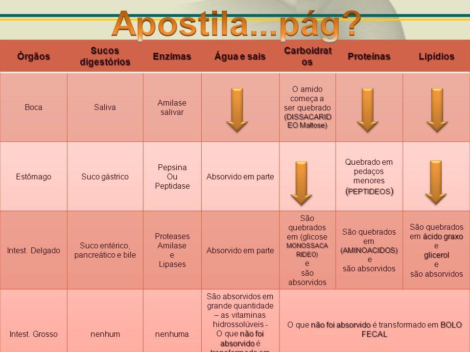 Apostila...pág Órgãos Sucos digestórios Enzimas Água e sais