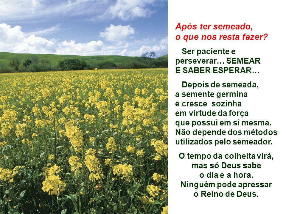 O tempo da colheita virá, mas só Deus sabe