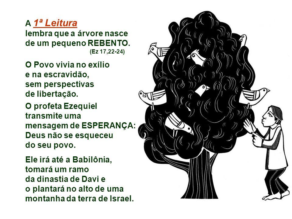 A 1ª Leitura lembra que a árvore nasce de um pequeno REBENTO.