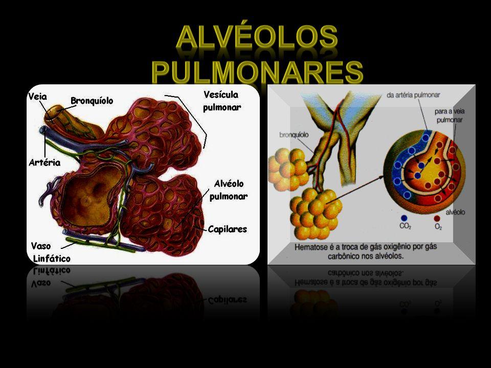 Alvéolos pulmonares